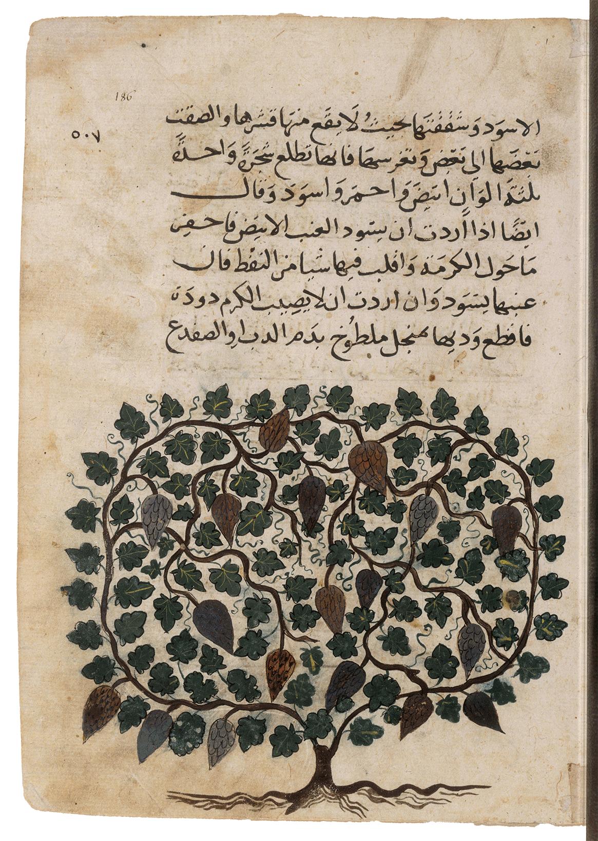 3.Arabe-2771—Fol.186