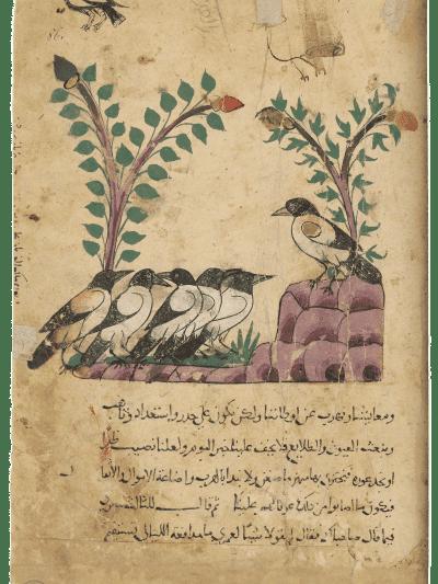 Der Rabenkönig. Aus: Kalila wa Dimna, Ägypten, 1310 (München, Bayerische Staatsbibliothek, Cod. Arab. 616, folio 86r), ravens, Kalila wa Dimna, Egypt, 709 AH/1310 CE